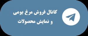 کانال تلگرام آموزش پرورش مرغ بومی