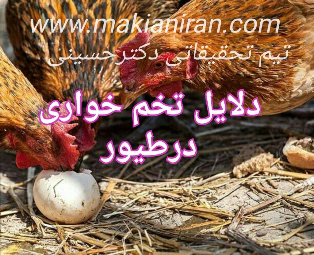 دلایل خوردن تخم در طیور