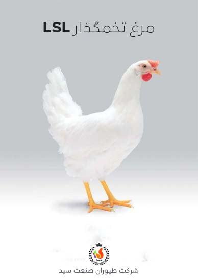 مرغ تخمگذار LSL