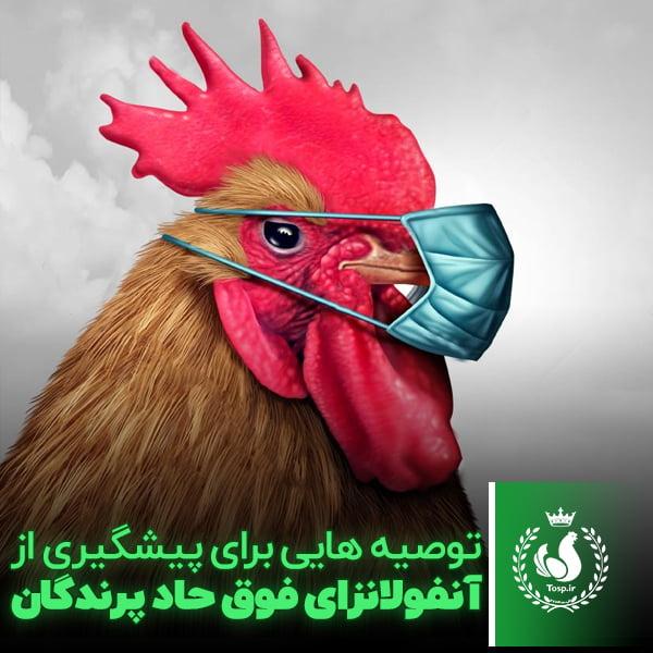 توصیه هایی برای پیشگیری از آنفولانزای فوق حاد پرندگان