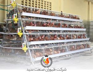 پرورش مرغ تخمگذار صنعتی در قفس