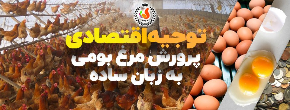 توجیه اقتصادی پرورش مرغ بومیبه زبان ساده