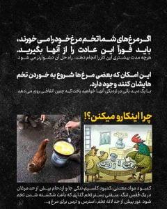 چرا-مرغ-تخمشو-میخوره_02