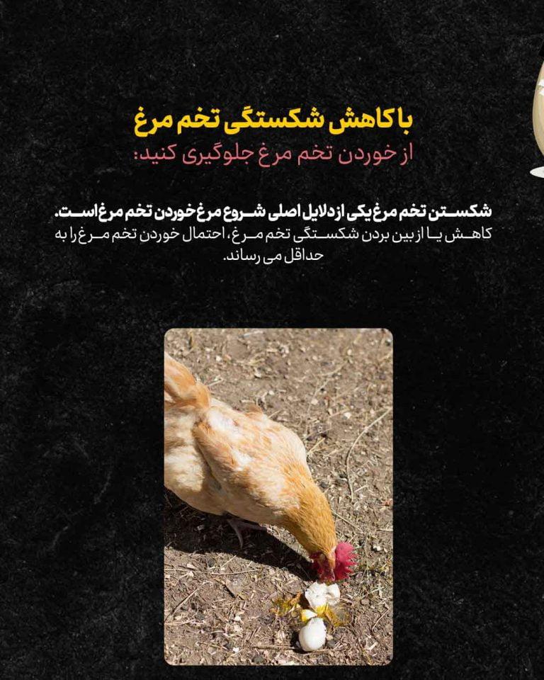 چرا-مرغ-تخمشو-میخوره_03