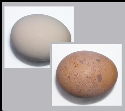 پوسته تخم مرغ