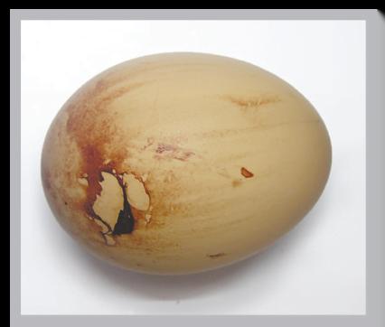 پوسته تخم مرغ خونی